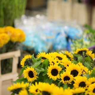 Zdjęcie wydarzenia Dolnośląskie Centrum Hurtu Rolno-Spożywczego S.A. – giełda kwiatowa