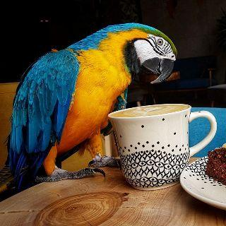 Parrot Coffee