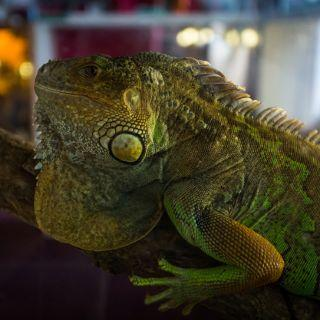 Exposición de animales exóticos ZOO Team