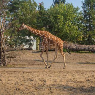 Zoo i Afrykarium